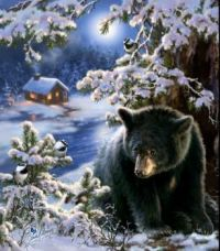 Black bear,  cabin in winter..