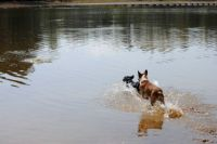 Dixie and Slick playing in the lake