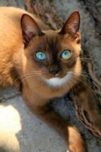 Those eyes!!