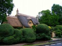 Cottage with crazy hedge !!
