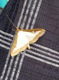 2020-06-27 vlindertje 2