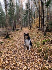 Autumn leaves and my beautiful dog