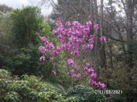 Far view of our Magnolia
