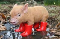 never more wet feet