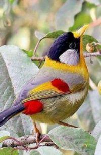 Beautiful Birds - No 38