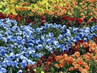 Sea of Pansies: Tough Puzzle!!!