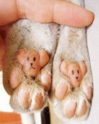 Teddy Bear Kitty Toes