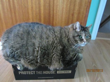 Puss the protecter (2)