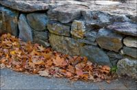 Leaves and Stone Wall