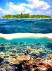 Tahiti above and beneath the surface