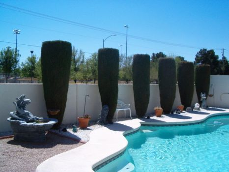 Vegas Pool Day!