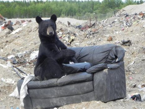 Bear 002( where's the remote)