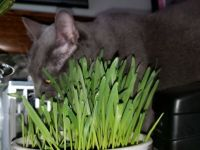 Fresh Cat Grass :)