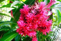 Flowers in Australia