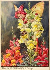 The Snapdragon Fairy (smaller size)