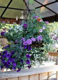 Lovely hanging Basket for Dblay