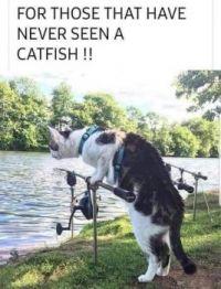 A Cat Fish