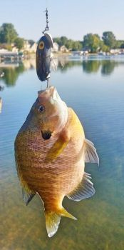 Jitterbug vs Sunfish