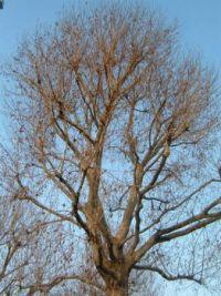 TreeBlue Sky