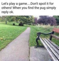Find the Pug (Dog)