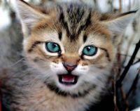Ferocious by Funny Cat Photos
