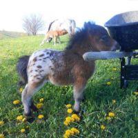 IMG_pony