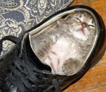 Cute...Just Fits!!