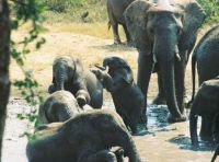Kruger - Elephants at the water hole