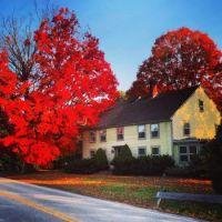 Stunning Fall trees