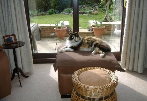 Animals - Cat - Sidney & Tasha - March 2015 no.4