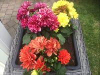 Zomer bloeiers