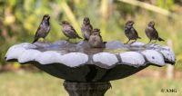 New Theme Next Week - Birds, Birdhouses, Birdbaths & Bird Feeders