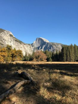 Meadow and Half Dome