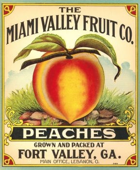 Fruit label 16