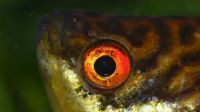 Fish eye lens?