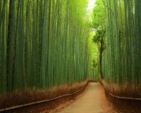 Bamboo Path, Kyoto, Japan-Yuya Horikawa