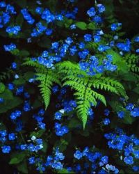 Blue Flowers in Fern