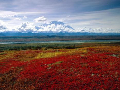 denali_national_park_alaska