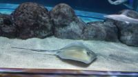 Stingray and friends