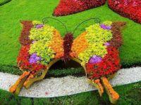 Butterfly Flowers.