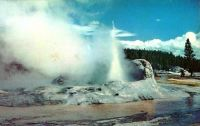 National Parks Grotto Geyser Yellowstone National Park Postcard