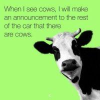 Cow Info