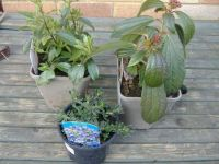 New Plants for the Rockery