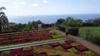 024 Bot.zahr. Funchal-Madeira