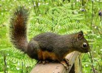solo-squirrel_
