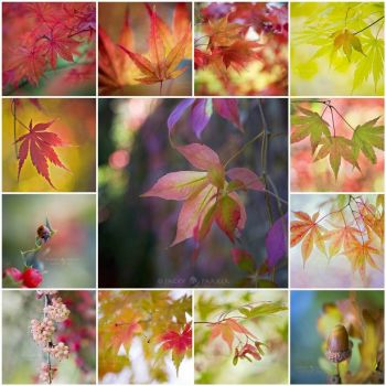 Autumn Lovin by Jacky Parker Floral Art on flickr
