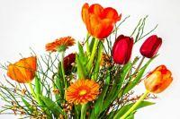 tulip-4032296_1920