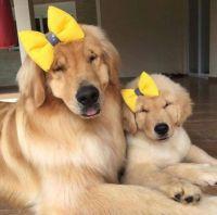 Like mother...like daughter...