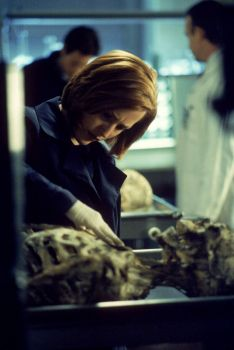 Gillian Anderson as Dana Scully in the X-Files, busily feeling up some dead guy
