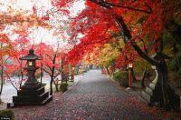 Autumn in Yyoto